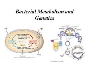 Bacterial Metabolism and Genetics Bacteria are usually used