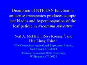 Disruption of NTPHAN function in antisense transgenics produces