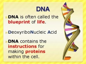 DNA is often called the blueprint of life