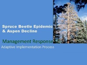 Spruce Beetle Epidemic Aspen Decline Management Response EIS