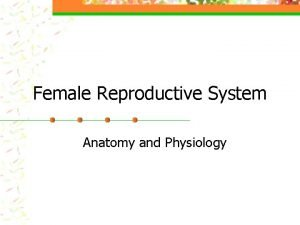 Female Reproductive System Anatomy and Physiology Female Vocabulary