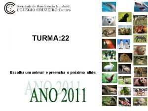 TURMA 22 Escolha um animal e preencha o