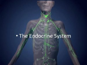 The Endocrine System I Hormones A Endocrine system