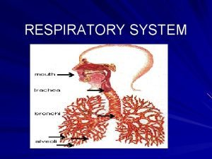 RESPIRATORY SYSTEM FUNCTION Responsible for supplying oxygen GAS