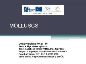 MOLLUSCS Vukov materil OR 03 69 Tvrce Mgr