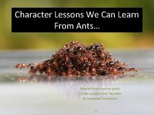 Character Lessons We Can Learn From Ants Adapted