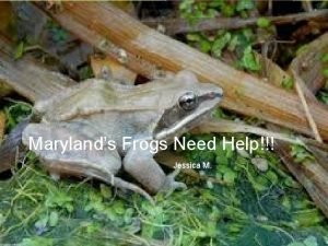 Marylands Frogs Need Help Jessica M Why Frogs