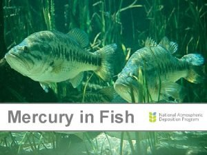 Mercury in Fish Where Does Mercury Come From