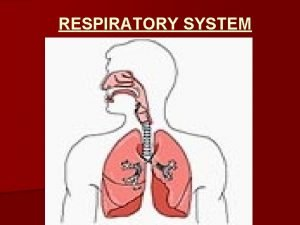 RESPIRATORY SYSTEM The respiratory system generally includes tubes