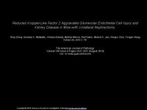 Reduced KrppelLike Factor 2 Aggravates Glomerular Endothelial Cell