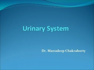 Urinary System Dr Manodeep Chakraborty Urinary system is
