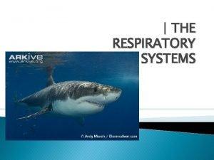 THE RESPIRATORY SYSTEMS Objetivos Definir Respiracin y como