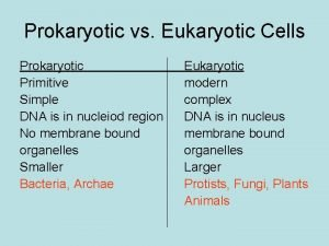 Prokaryotic vs Eukaryotic Cells Prokaryotic Primitive Simple DNA