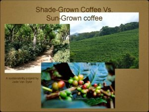 ShadeGrown Coffee Vs SunGrown coffee A sustainability project