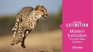 Modern Extinction The Sixth Mass Extinction Essential Questions