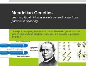 Mendelian Genetics Learning Goal How are traits passed
