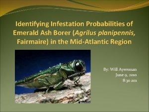 Identifying Infestation Probabilities of Emerald Ash Borer Agrilus