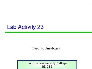 Lab Activity 23 Cardiac Anatomy Portland Community College