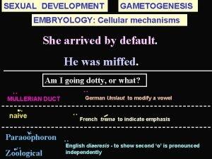 SEXUAL DEVELOPMENT GAMETOGENESIS EMBRYOLOGY Cellular mechanisms She arrived