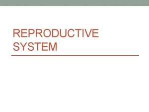 REPRODUCTIVE SYSTEM Male Reproductive System What do you