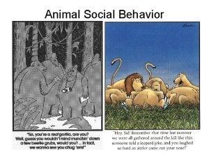 Animal Social Behavior Animal Social Behavior levels of