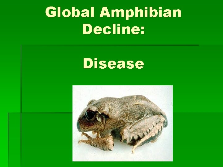 Global Amphibian Decline Disease Global Amphibian Decline Amphibian