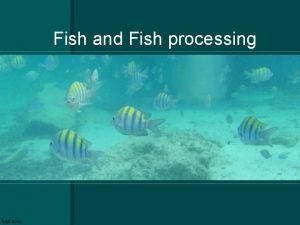 Fish and Fish processing Fish Procurement What are