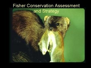 Fisher Conservation Assessment and Strategy Pacific Fisher Style