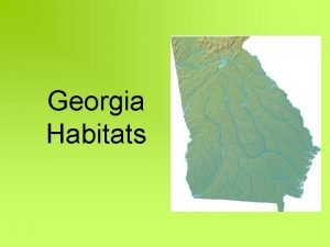 Georgia Habitats Georgia Mountains Habitat The mountains in