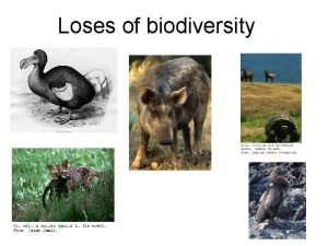 Loses of biodiversity Natural Extinctions Surprisingly we know