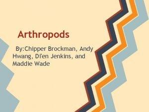 Arthropods By Chipper Brockman Andy Hwang Dien Jenkins