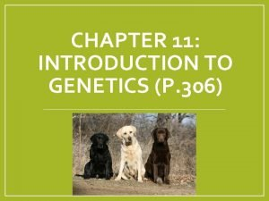 CHAPTER 11 INTRODUCTION TO GENETICS P 306 Q