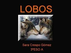 LOBOS Sara Crespo Gmez 3ESO A INDICE Introduccin