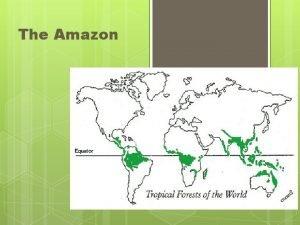 The Amazon Amazon Rainforest The rainforest most of
