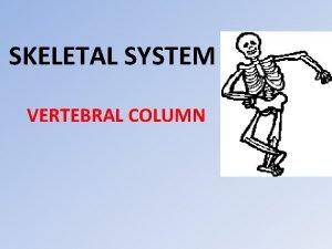 SKELETAL SYSTEM VERTEBRAL COLUMN The vertebral column spinal