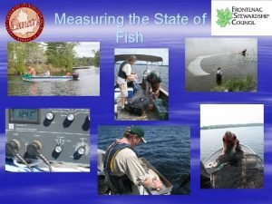 Measuring the State of Fish Measuring the State