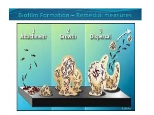 Introduction Biofilm a Assemblages of the microbial cells