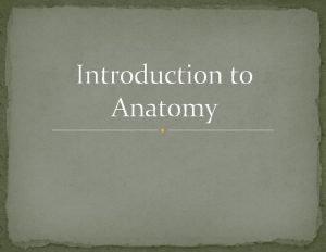 Introduction to Anatomy The Human BodyAn Orientation Anatomy