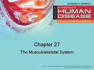 Chapter 27 The Musculoskeletal System Learning Objectives 1