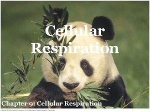 Cellular Respiration Chapter 9 Cellular Respiration Cellular Respiration