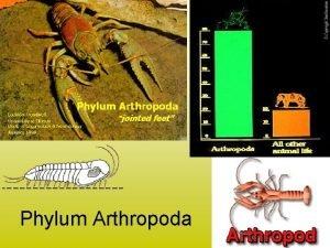Phylum Arthropoda 1 Phylum Arthropoda means jointed feet