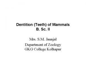 Dentition Teeth of Mammals B Sc II Mrs
