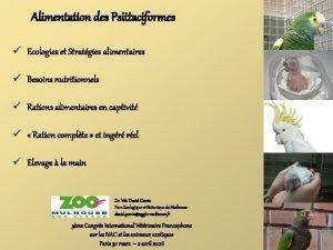 Alimentation des Psittaciformes Ecologies et Stratgies alimentaires Besoins