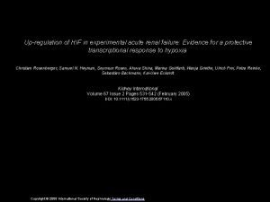 Upregulation of HIF in experimental acute renal failure