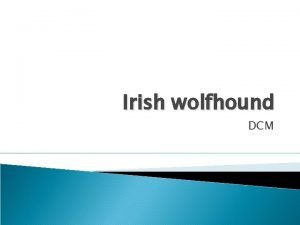Irish wolfhound DCM Cardiac examination Clinical examination Auscultation
