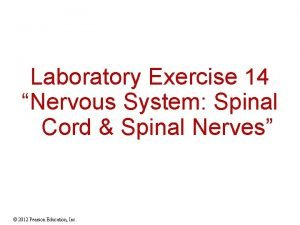 Laboratory Exercise 14 Nervous System Spinal Cord Spinal