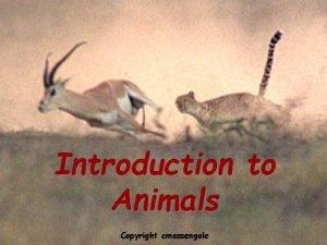 Introduction to animals Introduction to Animals Copyright cmassengale