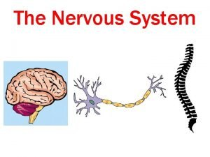 The Nervous System Functions of the Nervous System