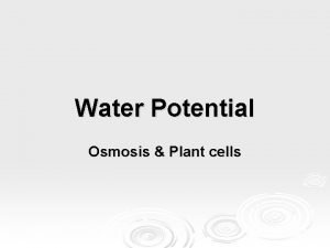 Water Potential Osmosis Plant cells Plants water potential