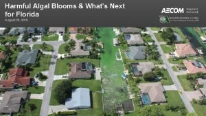 Harmful Algal Blooms Whats Next for Florida August